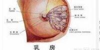 哺乳期和非哺乳期女性乳房屋硬块有